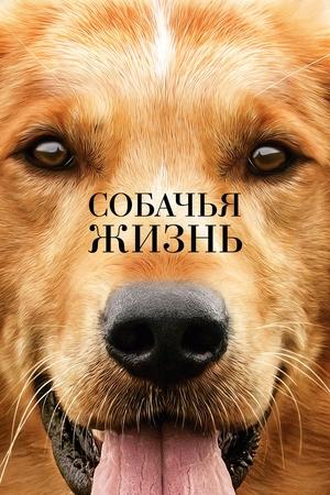Фильм «Собачья жизнь» (2017)