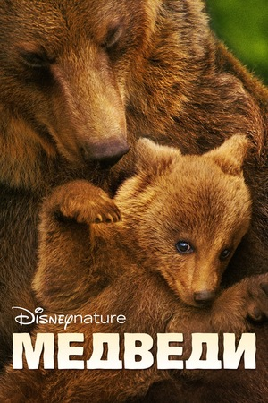 Фильм «Медведи» (2014)